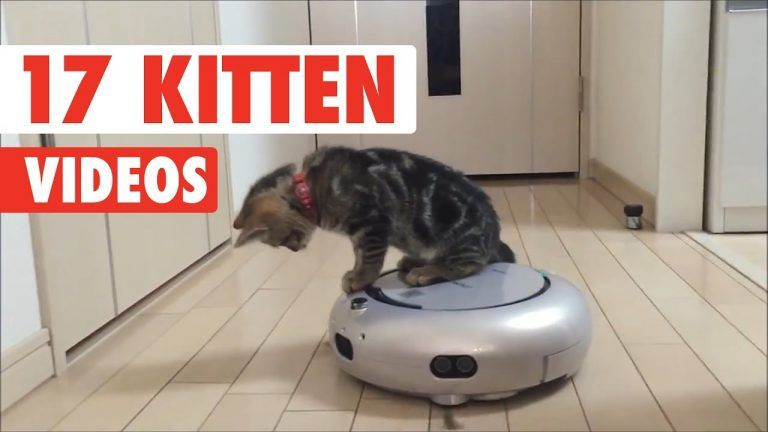 Too Cute Cats And Kittens Videos Compilation Funny Pet Videos Cute Kitten Gif Kitten Gif Kittens Cutest