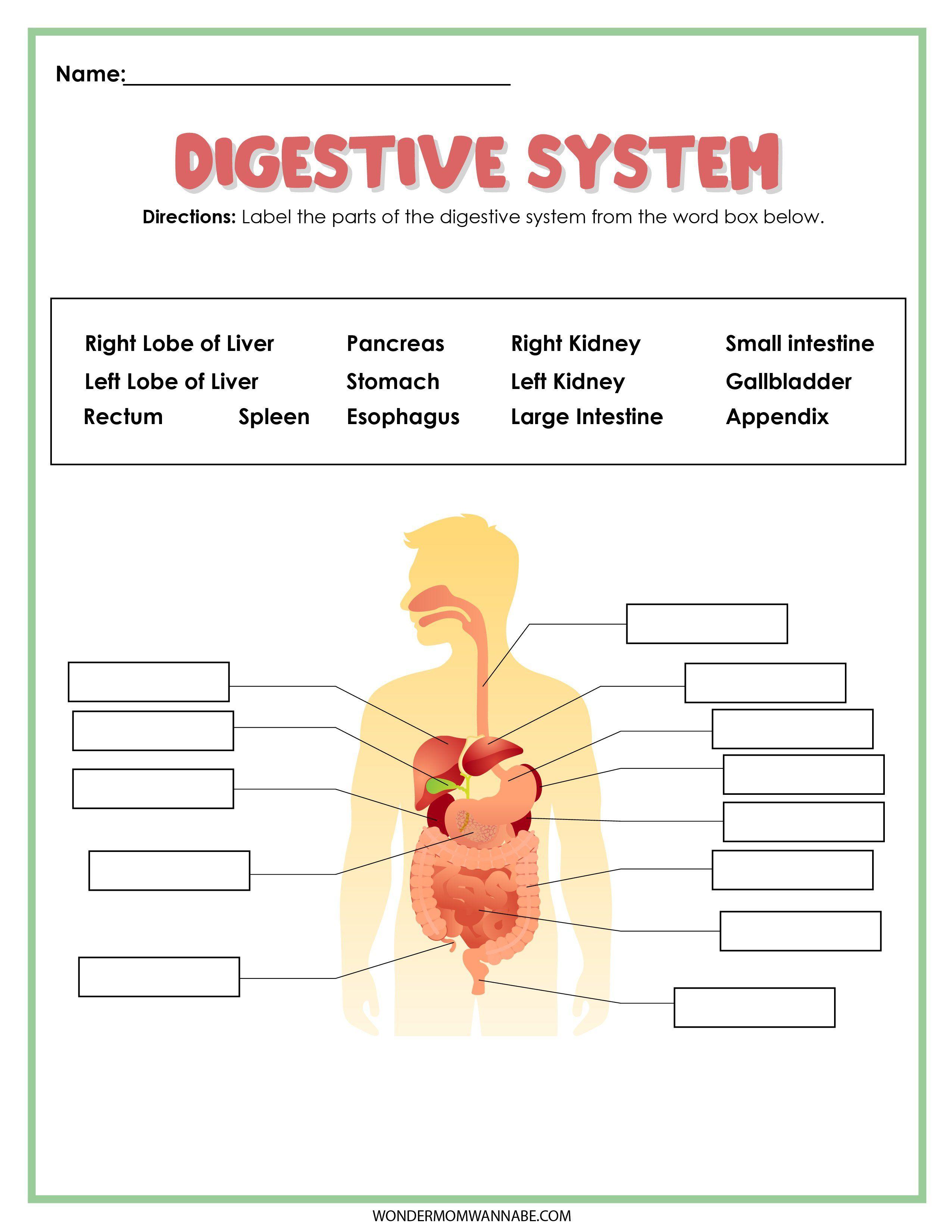 27+ Digestive System Activity Set