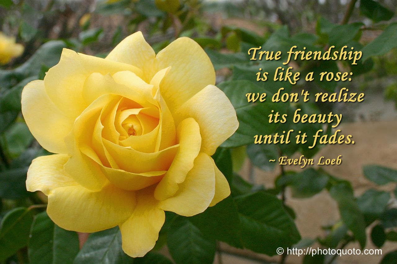 Pin by carol scriven on yellow rose of friendship pinterest sayings quotes evelyn loeb photo quoto dhlflorist Images