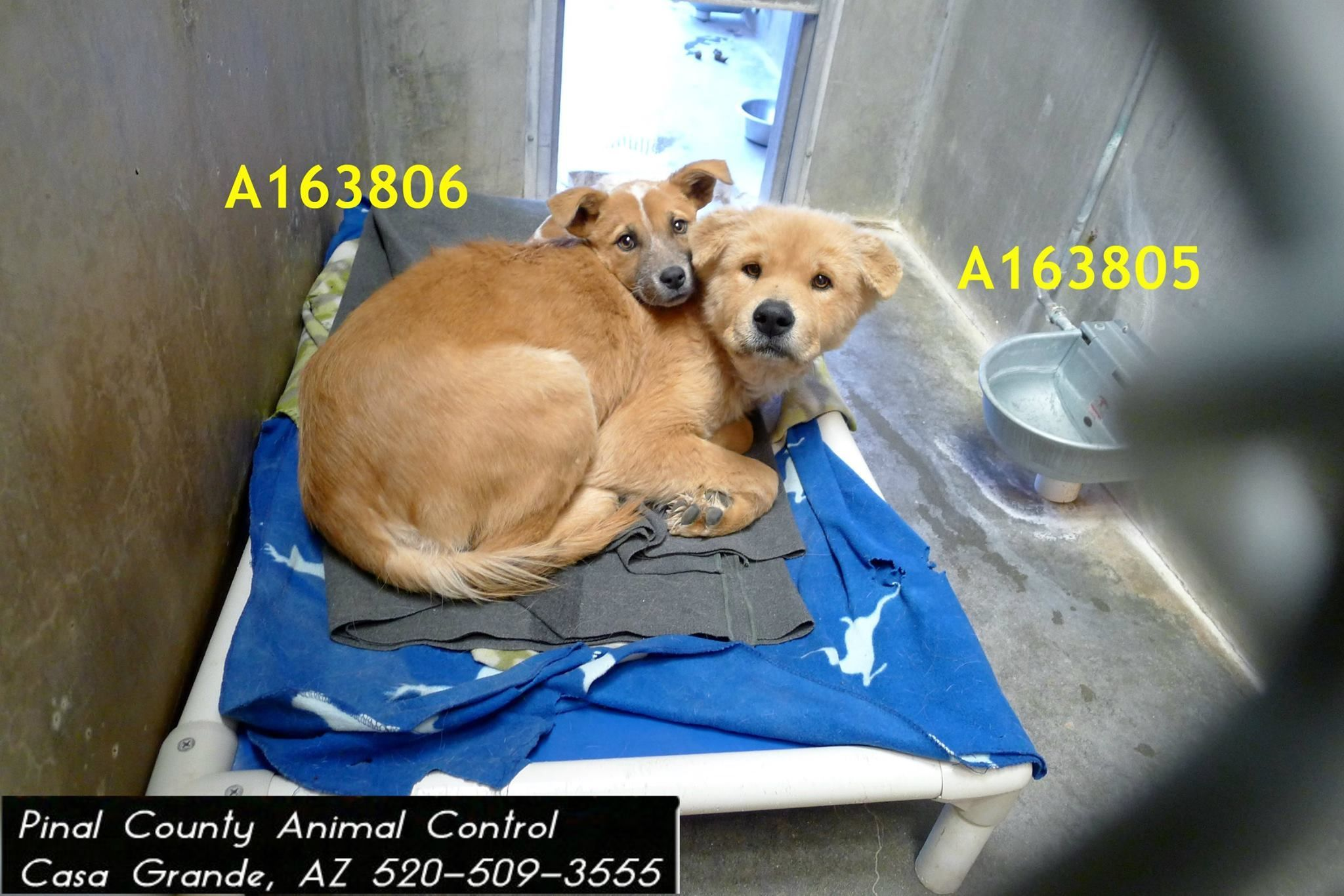 Pinal County Animal Shelter Animals NEED **EUTH LISTED FOR 01/15/15** ID#A163805...,  #Animal #animals #County #EUTH #IDA163805 #listed #Pinal #Shelter #unknownanimalslist