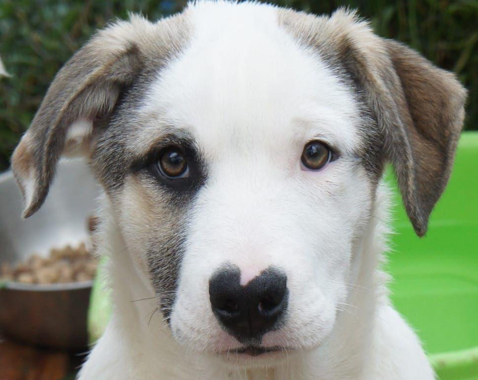 Pin auf gebt Tieren ein liebevolles Zuhause