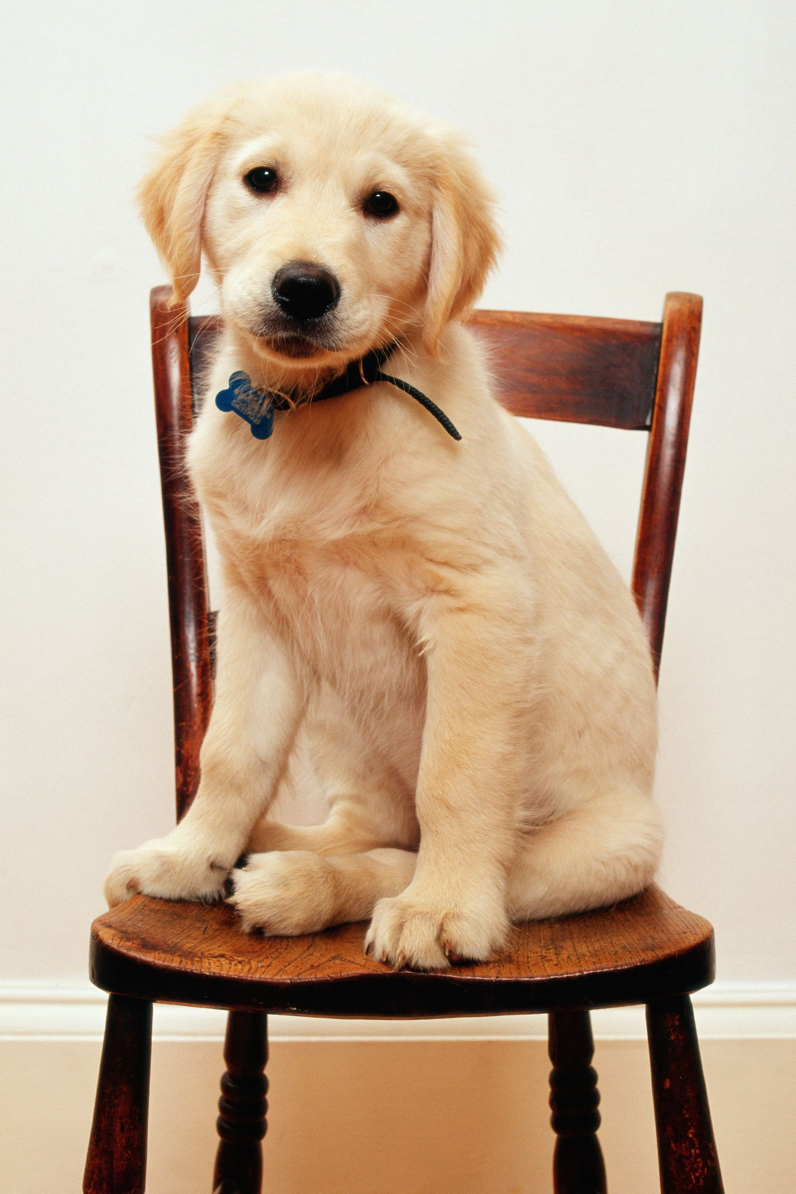 Cutepuppybreednames Golden Retriever Names Dog Names Cute Dogs