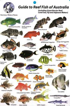 Natural World Laminated Guide To Reef Fish Of Australia Id Card In 2020 Fishing Australia Fish Florida Fish