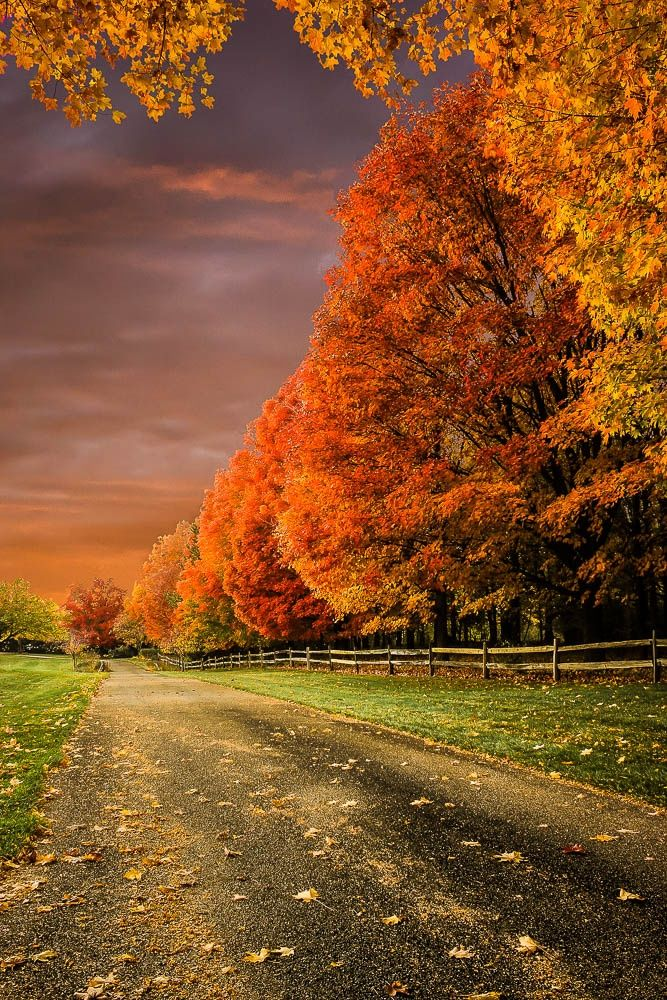 Beautiful Autumn Sunset: The Height Of Color By Laura Robles On 500px