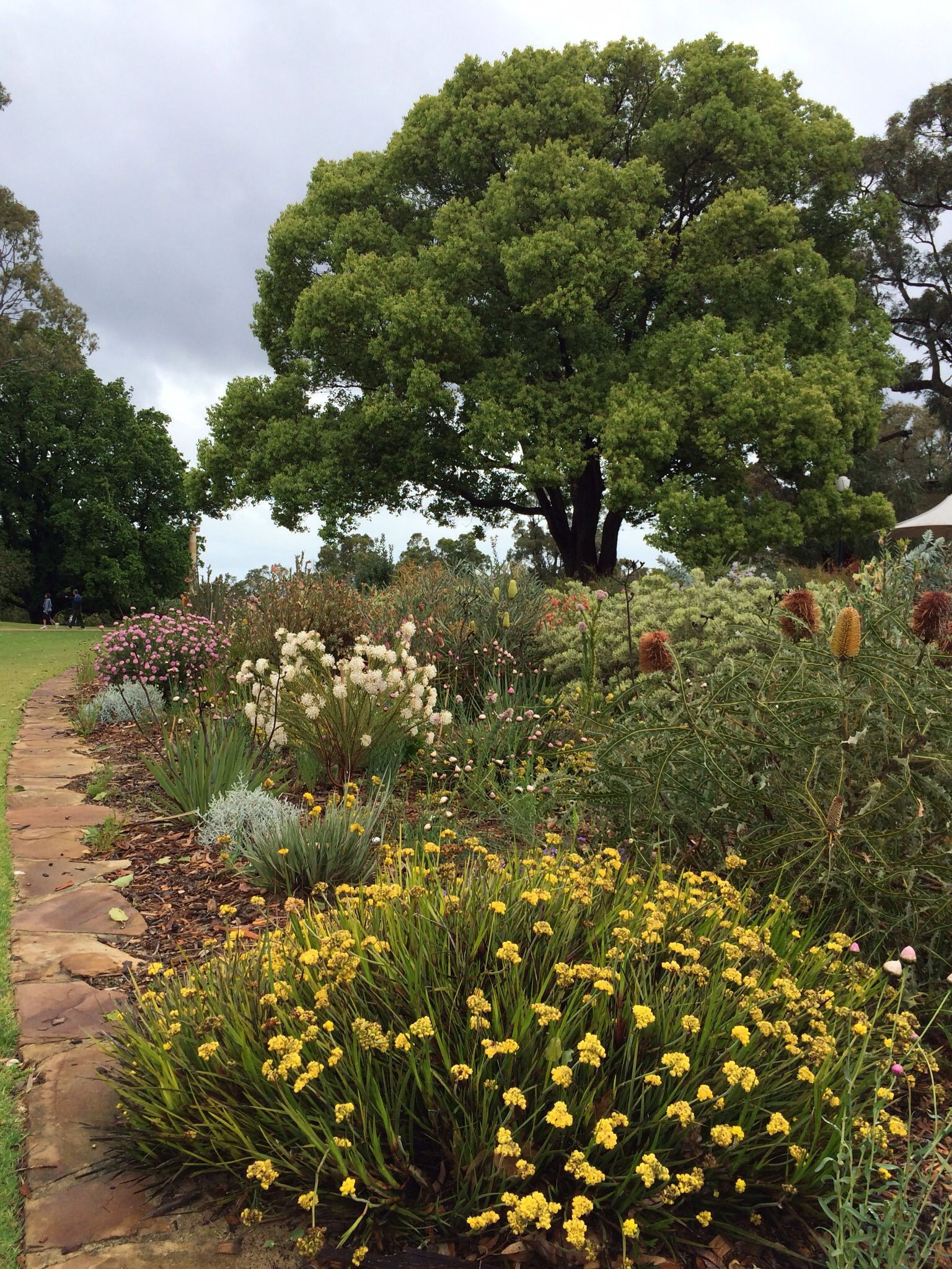 Kings Park, Perth, Western Australia | Garden | Pinterest | Perth ...