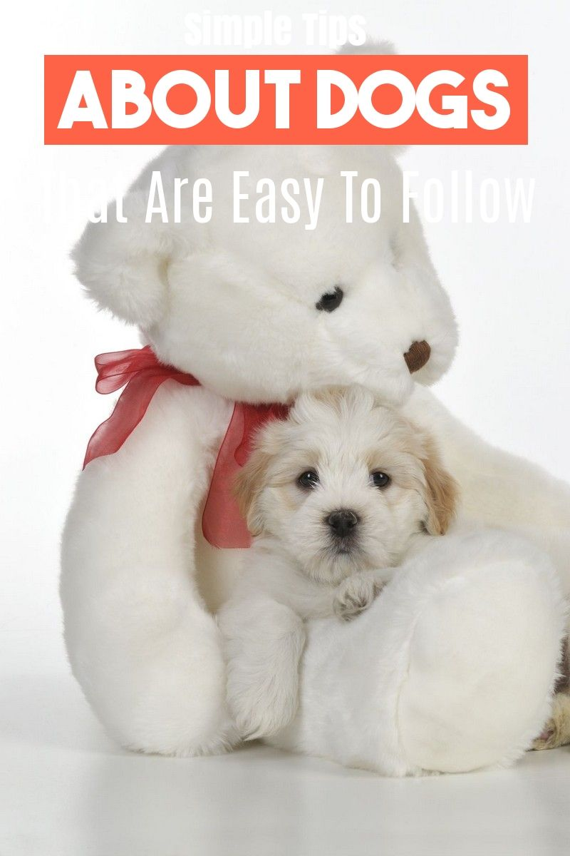 Maltese Puppies For Sale In Texas Craigslist