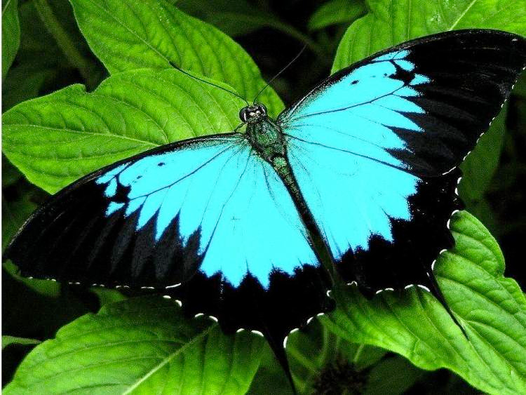 The Six Most Beautiful Butterflies In The World #butterflies
