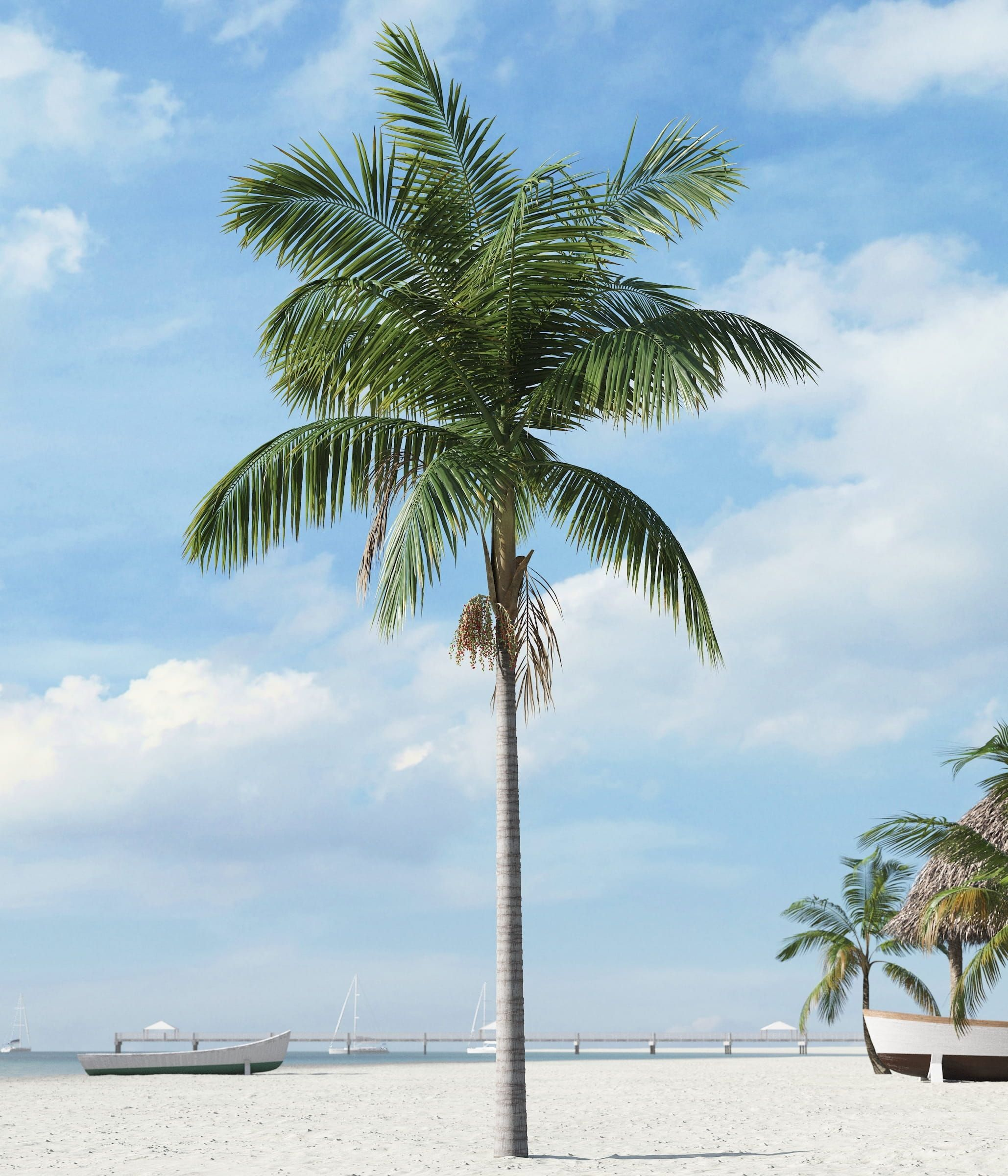 A highly detailed model of palm tree. Textures and ...