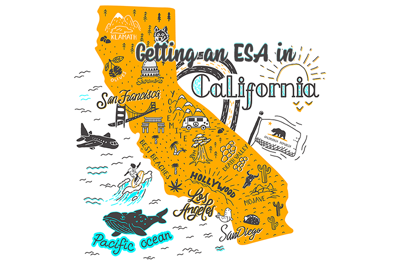 Emotional Support Animals In California (The Definitive
