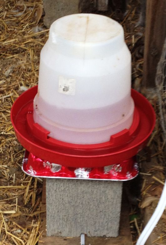 Build A Homesteading Water Heater For A Chicken Coop The Homestead Survival Homesteading Chickens Diy Project Chicken Water Heater Chicken Waterer Heated Chicken Waterer