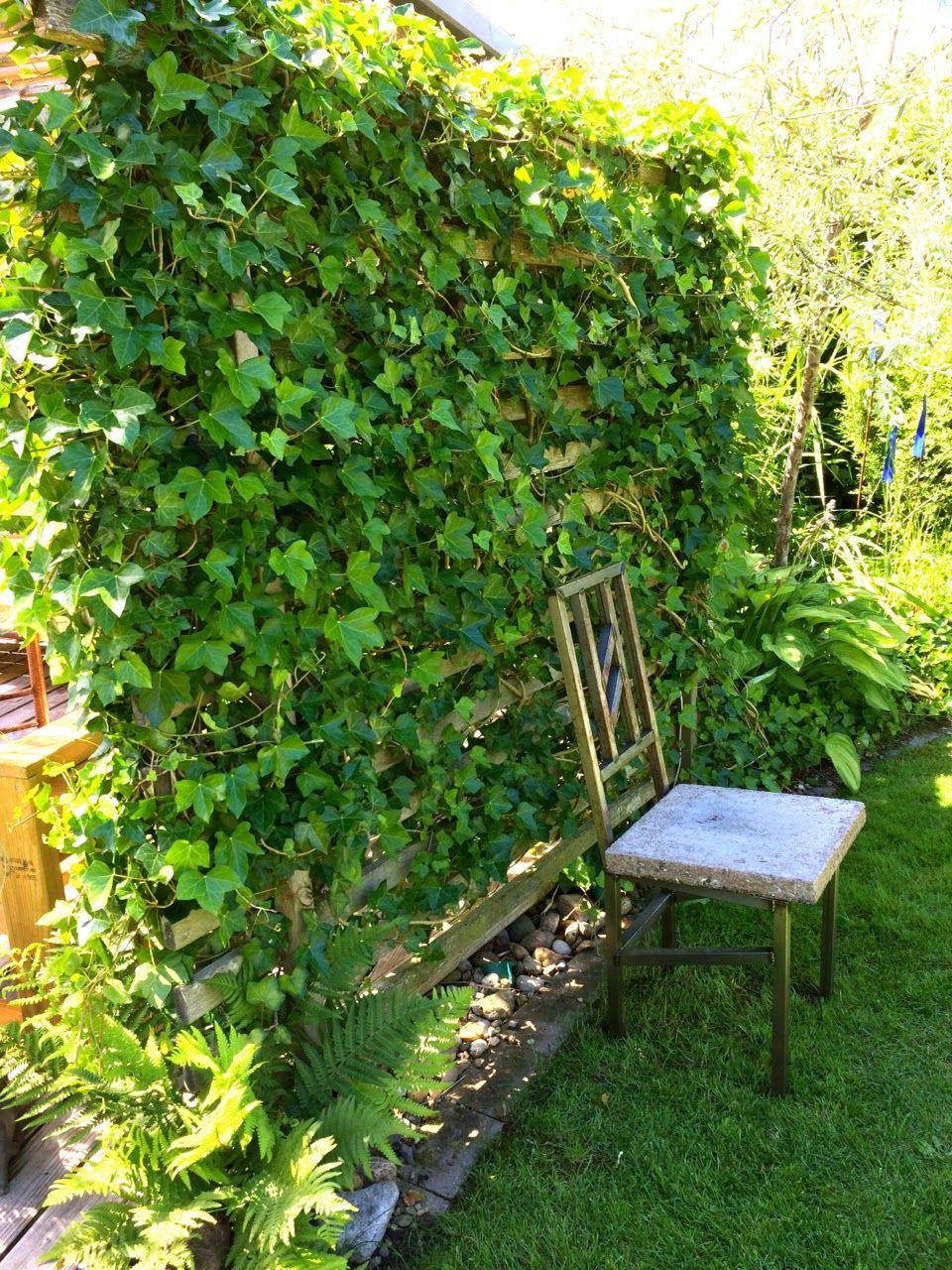 Trädgård plank trädgård : Avdelare med murgröna är grön Ã¥ret om. | TrädgÃ¥rd | Pinterest ...