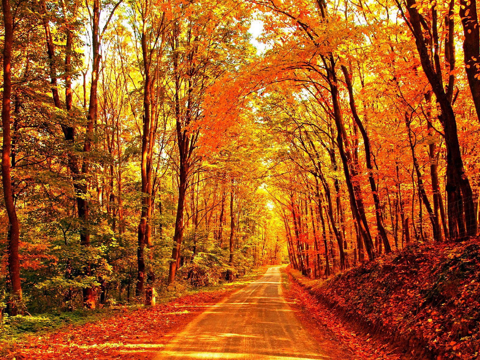 Charlie Brown Fall Wallpaper Fall Background Halloween Pinterest Fall Autumn