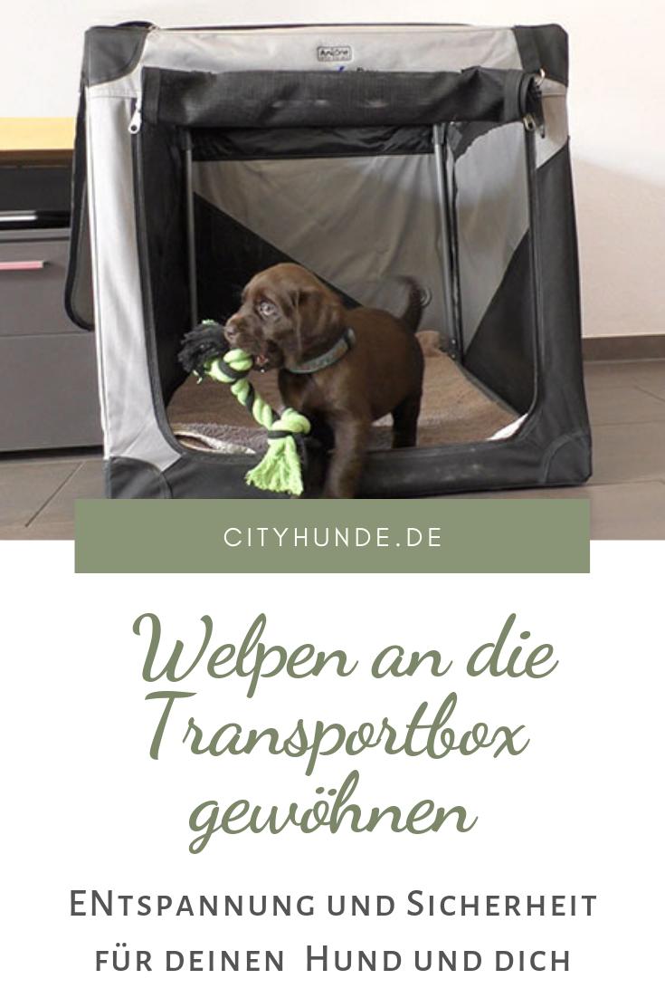 Hunde Welpen Schnell An Hundebox Transportbox Gewohnen In 2020 Welpen Hundebox Hunde