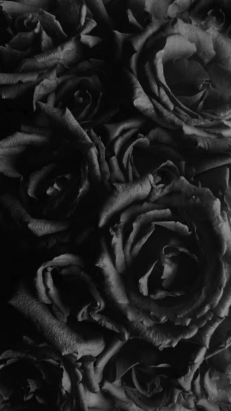 Il Colore E Poesia Dell Anima Rose Nere Sfondi Floreali Sfondi Neri