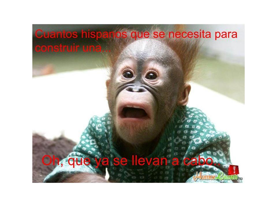 Spanish Memes Esp 4 Monkeys Funny Cute Monkey Monkey