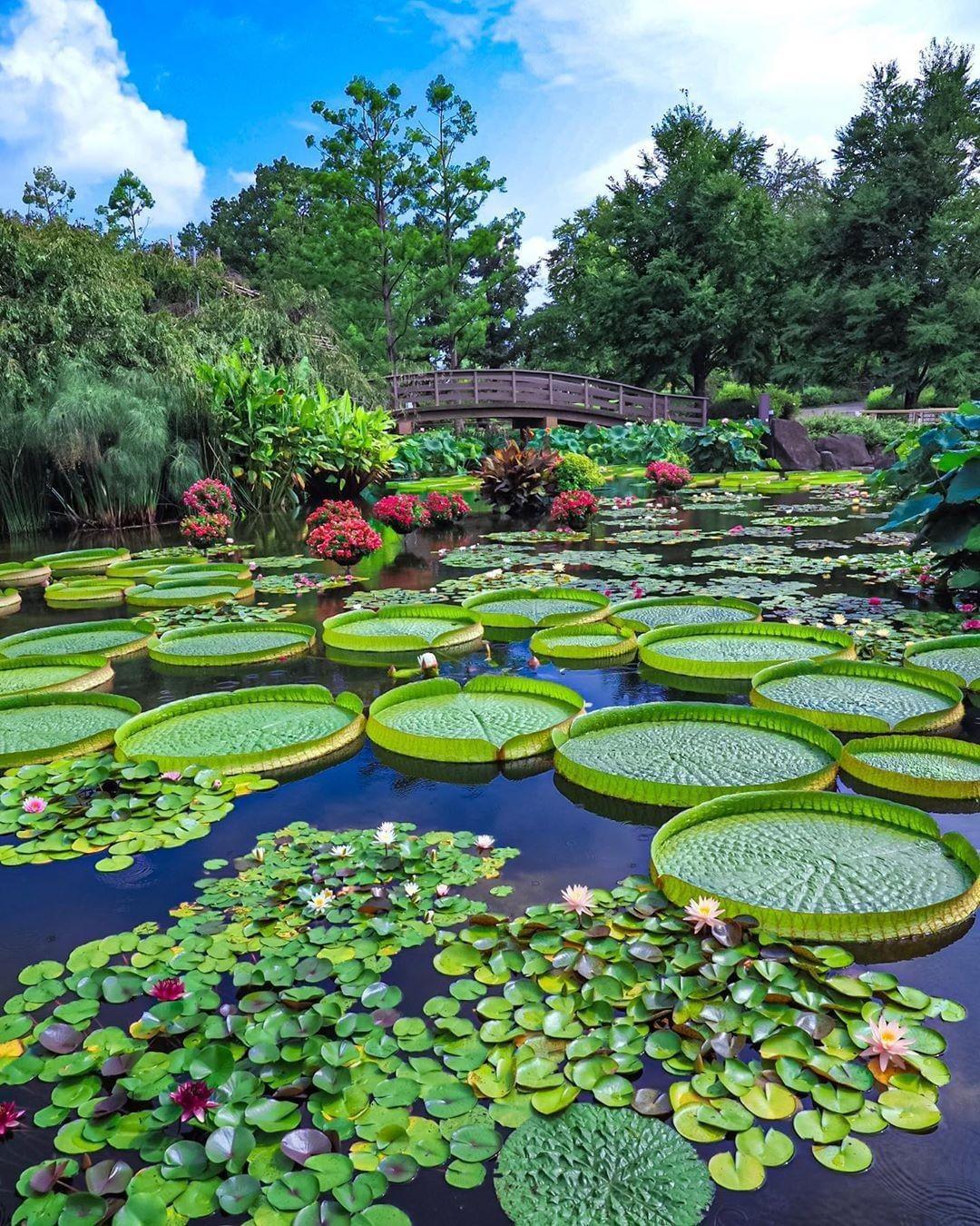 Japan Travel Shiga's Kusatsu Aquatic Botanical Garden is