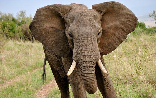 Eating The Big Data Elephant World Elephant Day Elephant Facts