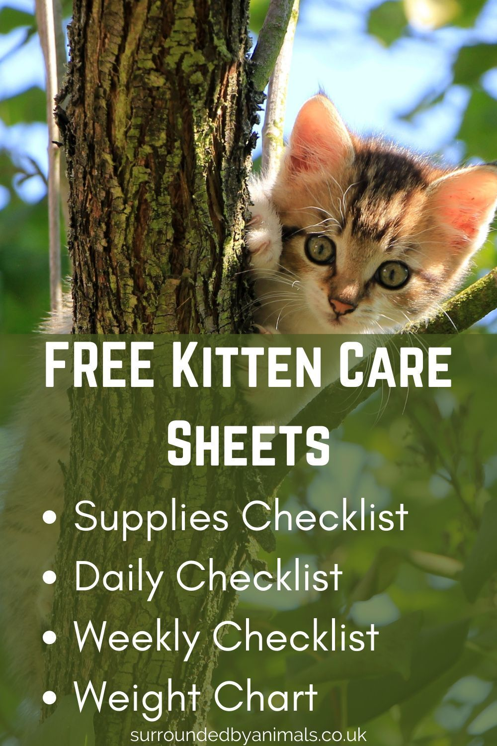 Get Our Free Kitten Care Sheets In 2020 Kitten Care Kitten Weight Charts
