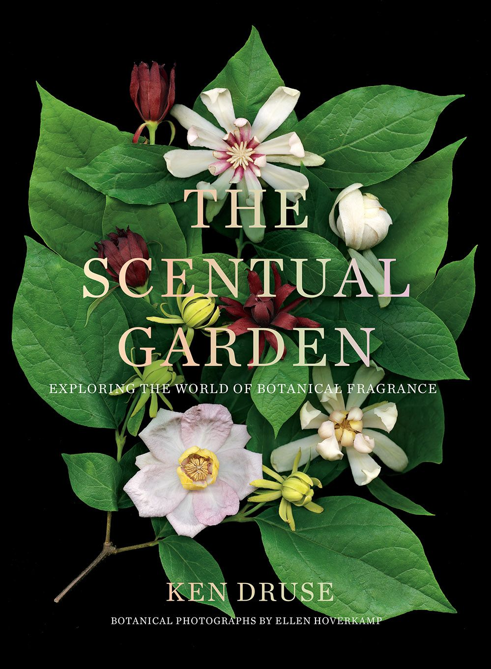 Download Pdf Books Scentual Garden Exploring The World Of