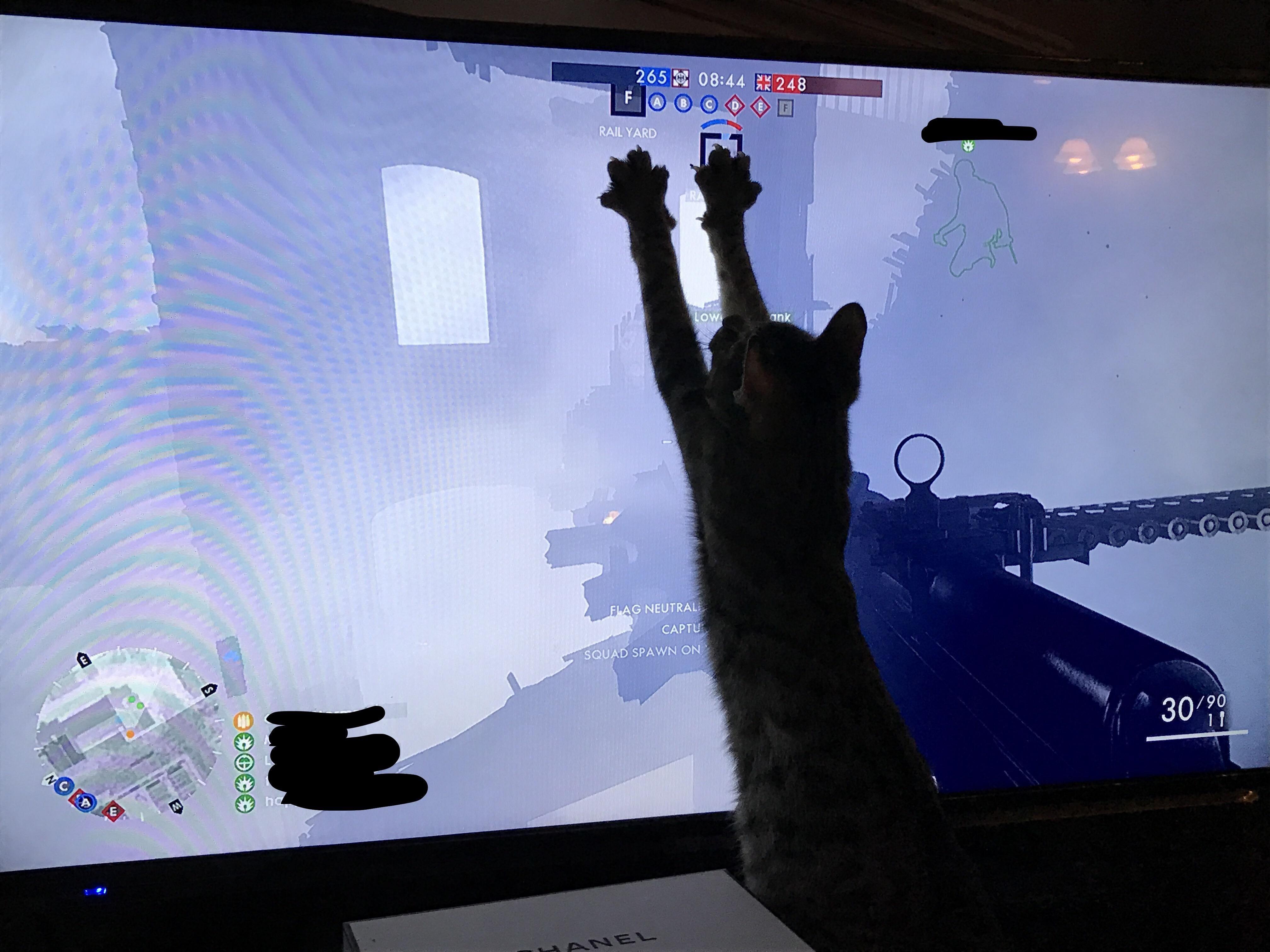 My cat helping me play BF1 For More Information... >>> http://bit.ly/29otcOB <<< ------- #gaming #games #gamer #videogames #videogame #anime #video #Funny #xbox #nintendo #TVGM #surprise #gamergirl #gamers #gamerguy #instagamer #girlgamer #bhombingamerica #pcgamer #gamerlife #gamergirls #xboxgamer #girlgamer #gtav