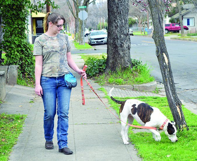 Loose Leash Walking Training Your Dog Not To Pull Training Your