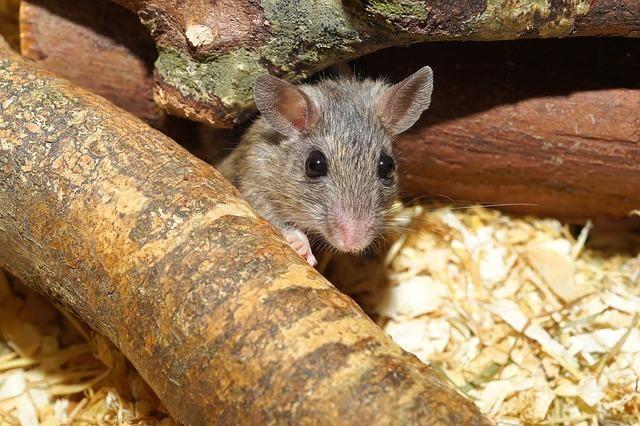 super pi ge souris sans danger pour vos animaux domestiques et sans tuer les souris pi ge. Black Bedroom Furniture Sets. Home Design Ideas