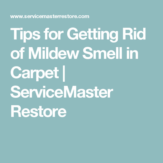 Tips For Getting Rid Of Mildew Smell In Carpet