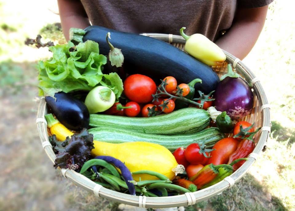 Vegetable harvest 2011 - Homegrown Delight