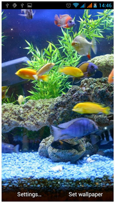 Check Out Why Aquarium Live Wallpaper Free App For Android Is