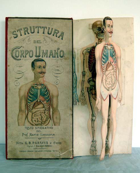 Strange Remains — This vintage Italian human anatomy atlas ...