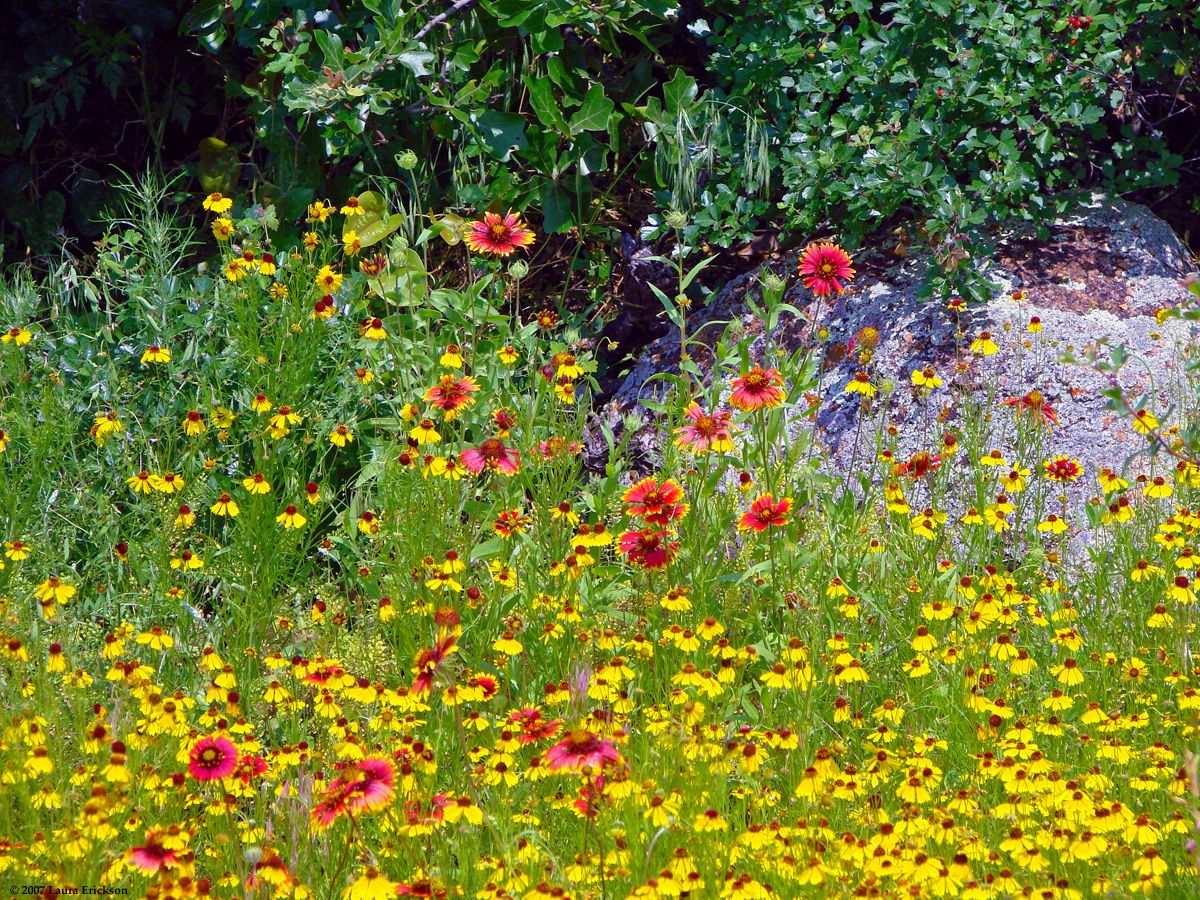 best Spectacular flowers and Heavenly gardens images on