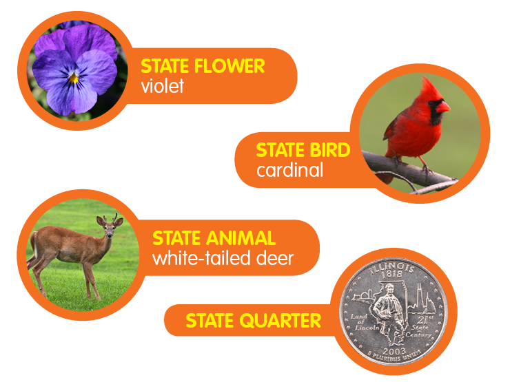 Illinois State birds, Illinois, Facts for kids