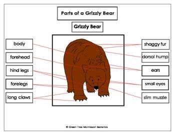 Brown Bear Diagram Hot Water Cylinder Thermostat Wiring Panda Body Toyskids Co Labeled Of A Grizzly Product Diagrams Red Habitat