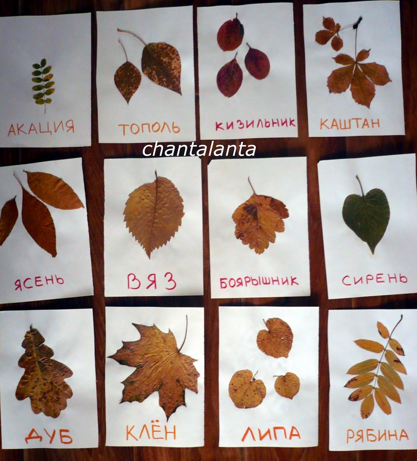 Fall colors activities for toddlers - Fall Activity For Toddlers Making First Herbarium