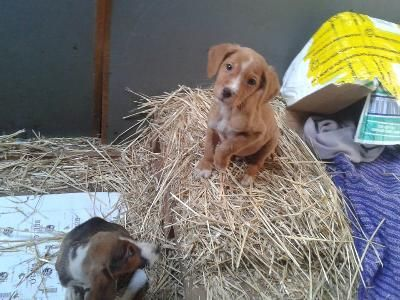 Pin Von Suki Berry Auf Hund Und Ihr Zu Hause In 2020 Mischlingshunde Tierheim Hunde Susseste Haustiere