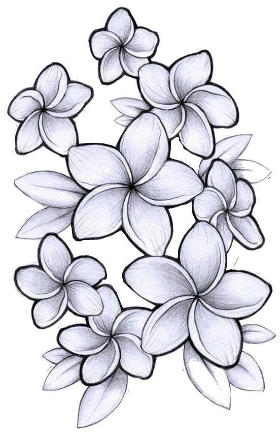 Plumeria Tattoo Outline Hawaiian Flower Drawing Plumeria Tattoo Flower Drawing