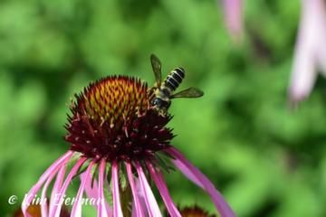 Kim Eierman, environmental horticulturist and specialist on ecological landscapes and native plants, weighs in on how we can garden to support pollinators.