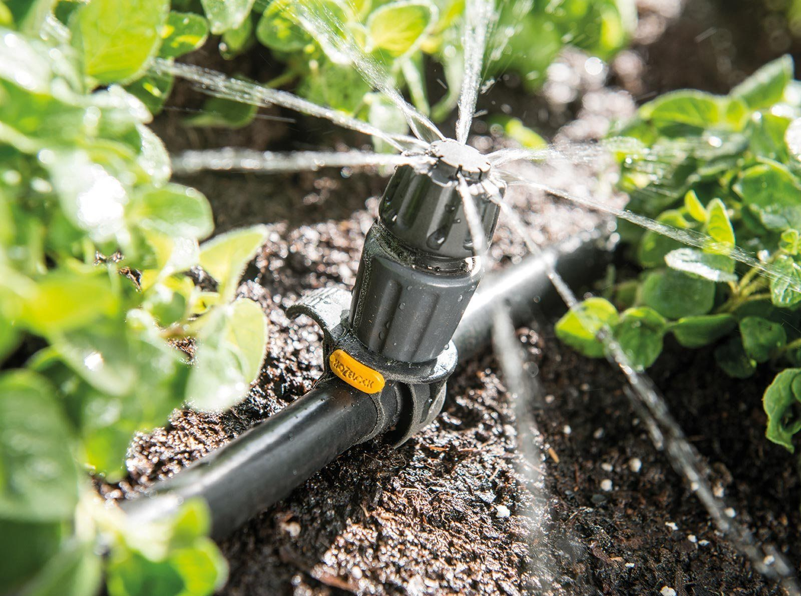 Choosing The Best Frugal Automatic Plant Watering System Is Probably One Of The Most Daunting Tasks Fo Plant Watering System Plants Automatic Watering System