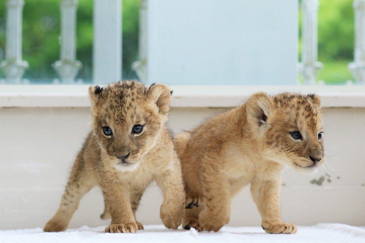 Cat おしゃれまとめの人気アイデア Pinterest Zs J かわいい動物の赤ちゃん 野生動物 美しい動物