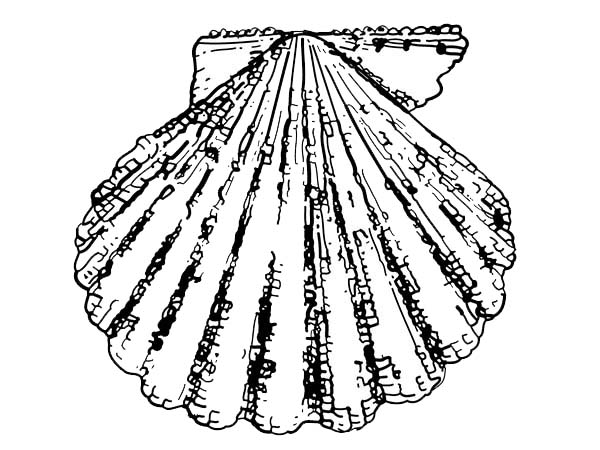 A Lovely Calico Scallop Seashell Coloring Page Download Print Online Coloring Pages For Free Color N Online Coloring Pages Coloring Pages Online Coloring