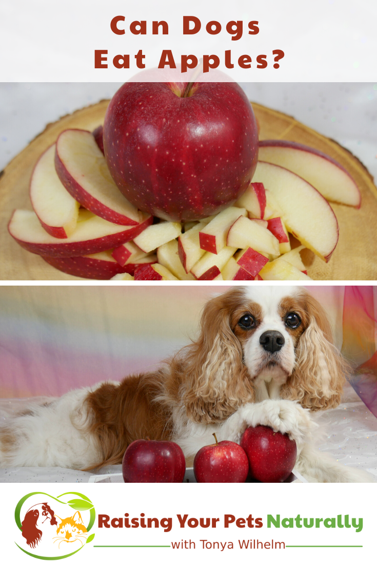 Can Dogs Eat Apples? Yes. in 2020 Can dogs eat apples