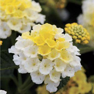 Pin De Robotespano Em Plantas Botanica Flores Maravilhosas Paisagem Flores Flores Naturais
