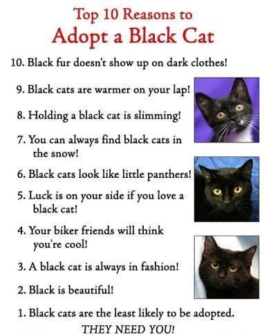 Adopt As Black Cat Black Cat Cat Cards Adoption