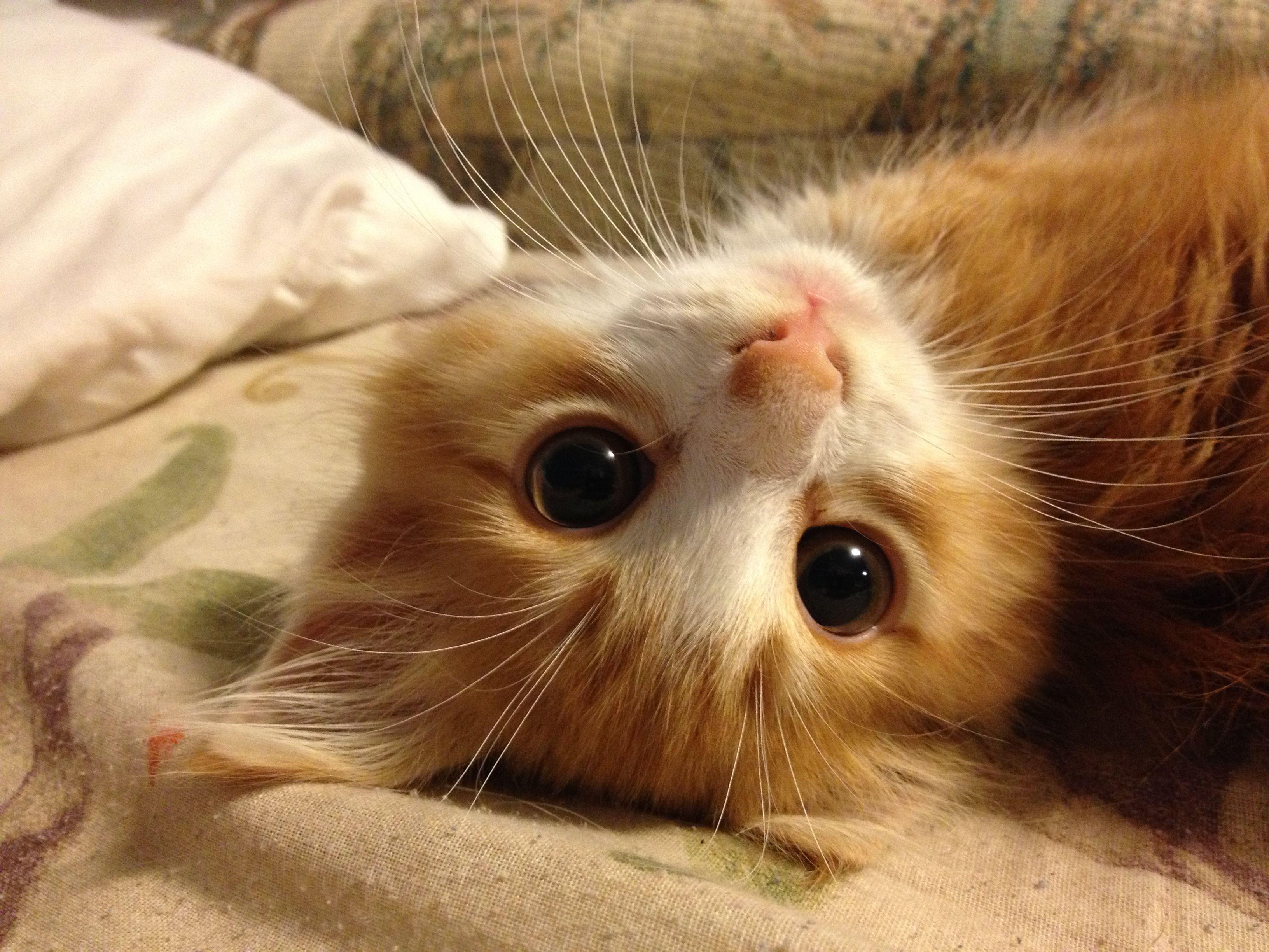 My Baby Boy 3 Cute Cats Kitten Breeds Kittens Cutest