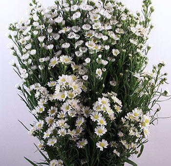 Aster Flower White Wedding Centerpiece