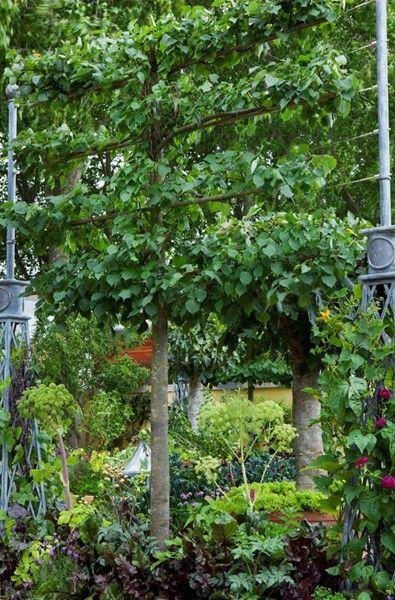 espalier fruit trees bunny guinness landscape design h g landscape garden inspiration. Black Bedroom Furniture Sets. Home Design Ideas