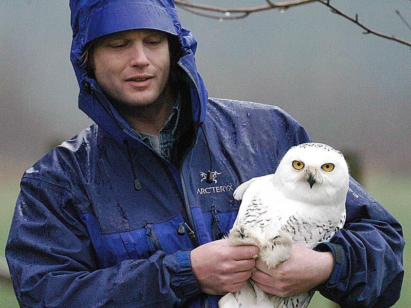 Career Options (Veterinarian, Wildlife Biologist, Canine