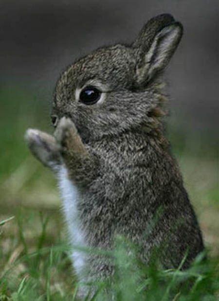 Baby Teacup Bunnies : teacup, bunnies, Teacup, Bunnies, Animals, Pictures,, Animals,