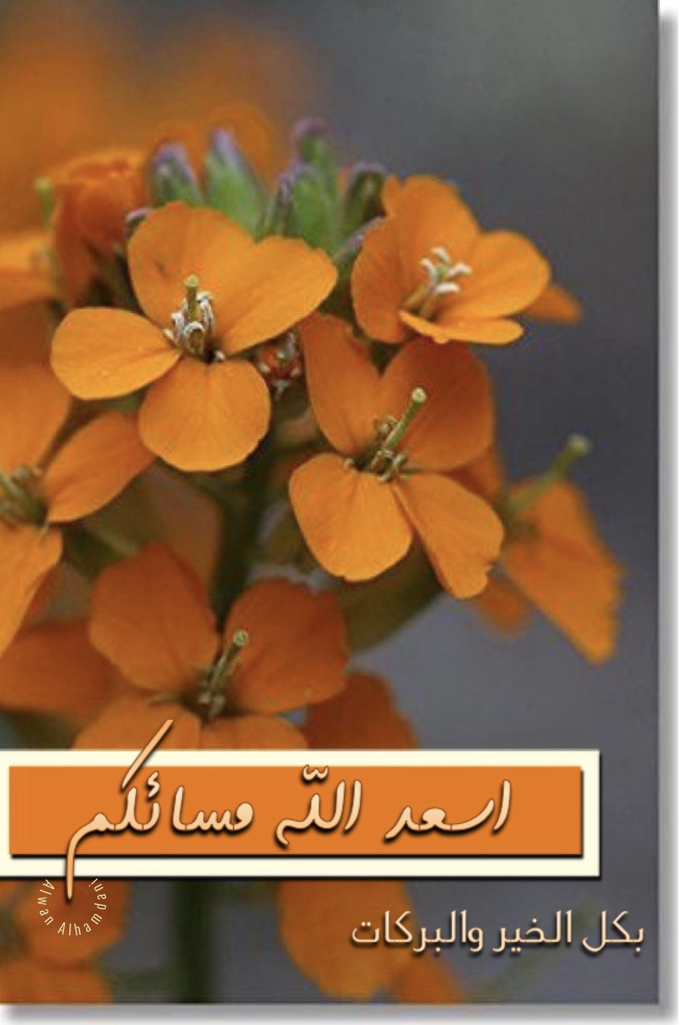 صبح و مساء On Instagram مساء الخير مساء الورد تصميم تصاميم السعودية صبح و In 2020 Good Night Flowers Good Night Image Good Evening