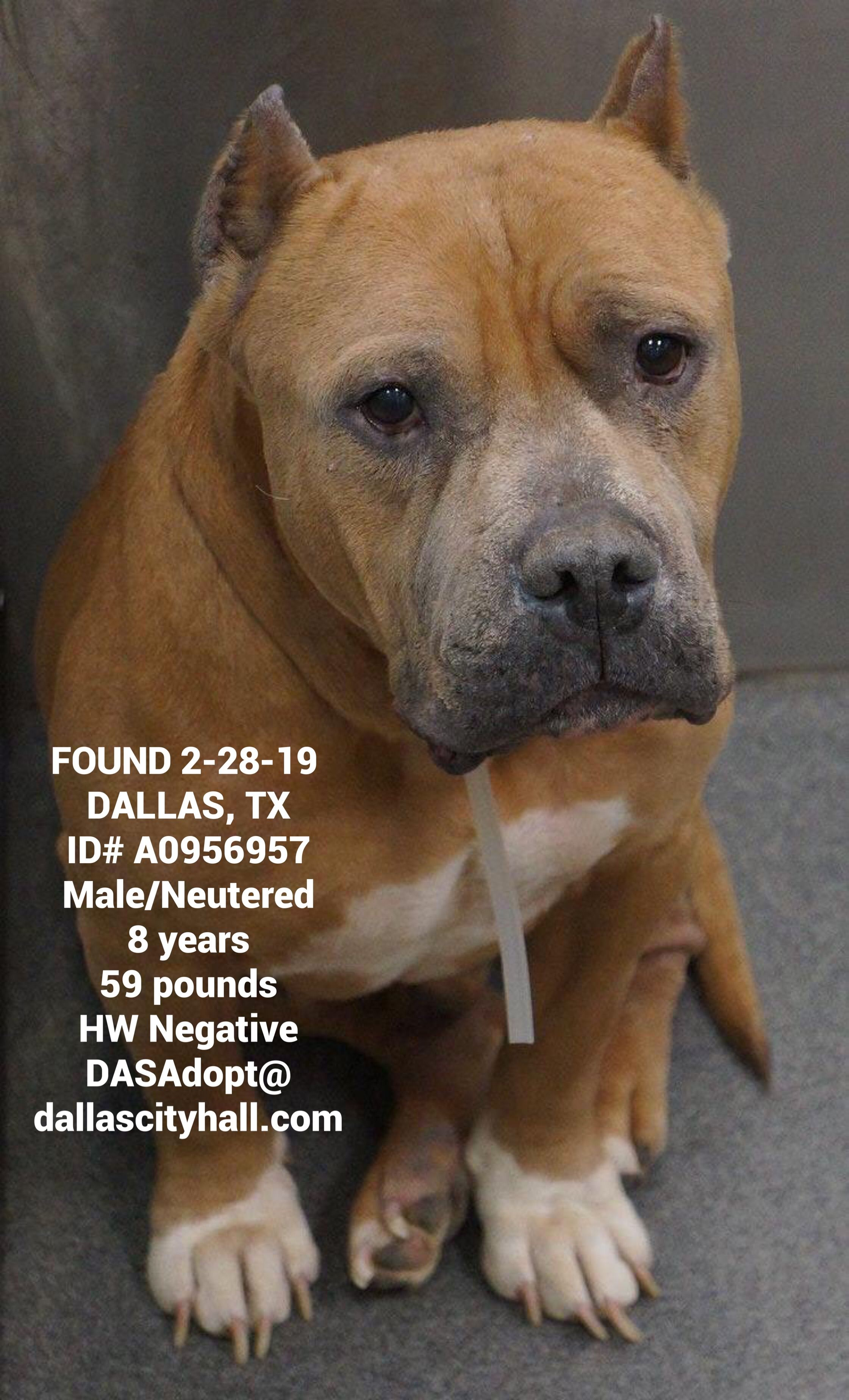 Pin By Us Lost Dog Registry On Us Lost Dog Registry Losing A Dog